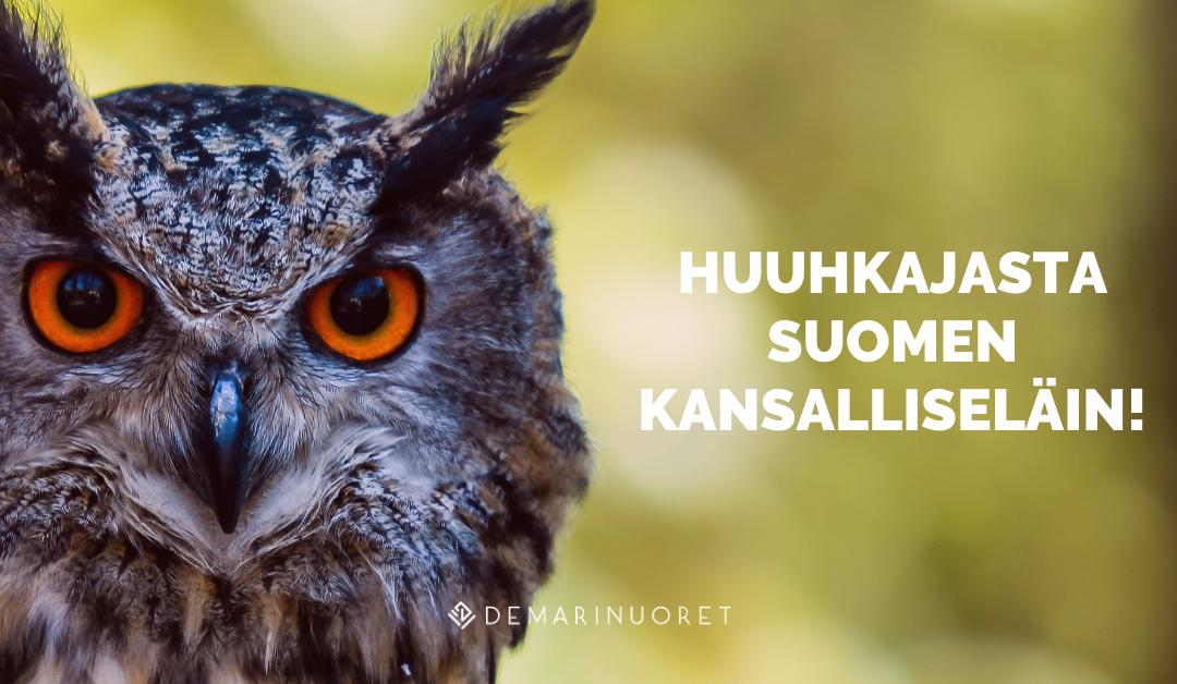 Demarinuoret: Suomen maakuva nousuun jalkapallolla – huuhkajasta tehtävä kansalliseläin!
